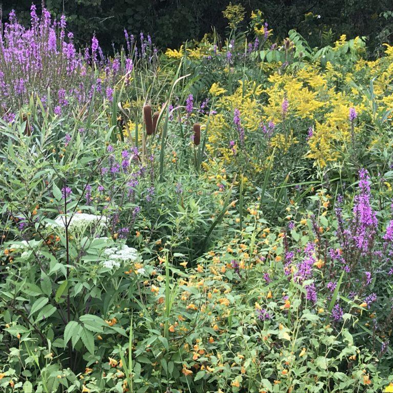 Bountiful ditch side herbalism!